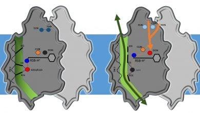 Photo of تعیین ساختار channelrhodopsin
