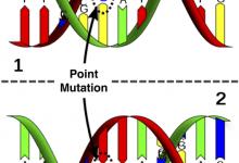 تفاوت های ژنتیکی می تواند به اثربخشی و ایمنی CRISPR کمک کند_اخبار زیست فناوری