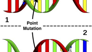 Photo of تفاوت های ژنتیکی می تواند به اثربخشی و ایمنی CRISPR کمک کند
