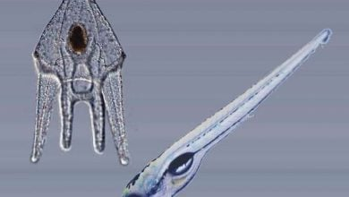 Photo of جهش ژنتیکی منشا برخی از اندام های انسان