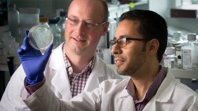 Photo of حافظه سلول های T می تواند باعث تقویت ایمنی درمانی سرطان شود