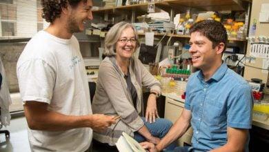 Photo of ارائه روش جدیدی برای شناسایی توالی های غیر قابل شناسایی مهم پروتئین ها