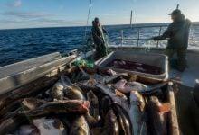 Photo of ضمانت تجارت بالای صنعت پرورش ماهی سالمون در اسکاتلند