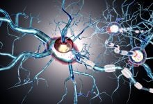 فرایند خودکفایی سلول باعث بیماری های خودایمنی می شود!_اخبار زیست فناوری