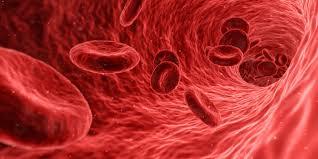 پتاسیم برای ریتم های روزانه در گلبول های قرمز انسان حیاتی است_اخبار زیست فناوری
