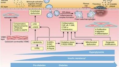 چه چیزی در سلول های بدن هنگام شروع دیابت نوع 2 وجود دارد?!_اخبار زیست فناوری