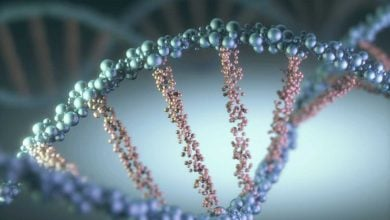 Photo of 'Speculative' genetic link to homosexuality found