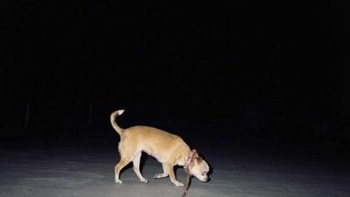 Photo of روشن شدن خیابانها با فضولات سگها