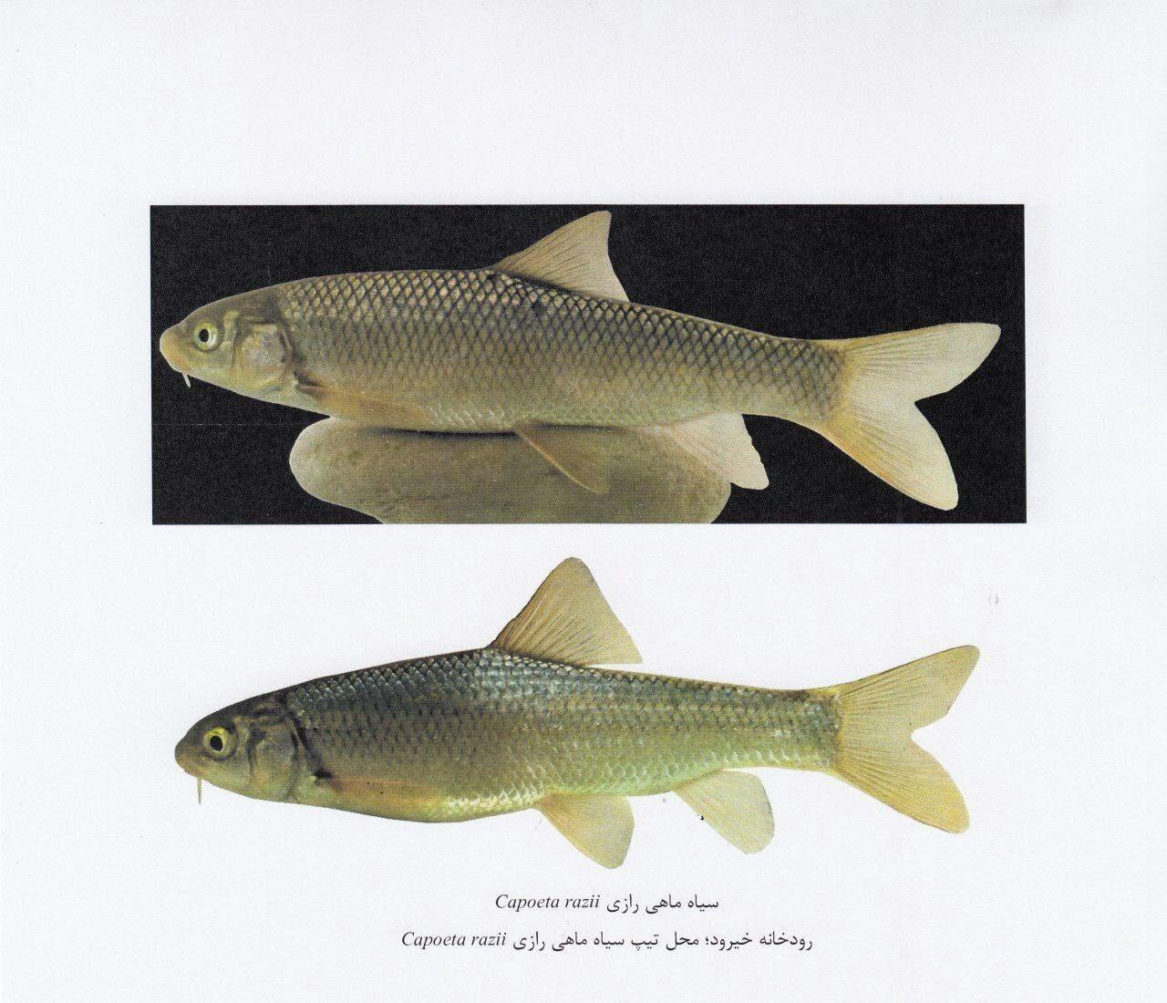 اهمیت علمی و کارایی مربوط به ماهی شناسی