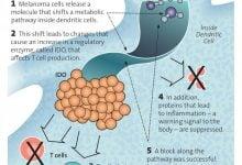 کشف یک راه جدید برای ارائه سلولهای ملانوما به سیستم ایمنی