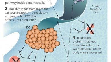 Photo of کشف یک راه جدید برای ارائه سلولهای ملانوما به سیستم ایمنی