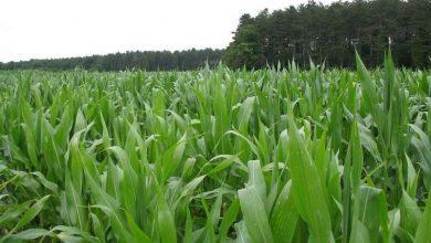 پاسخ گیاهان به تغییرات نور در سطح ملکولی - اخبار زیست فناوری