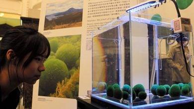 Photo of جلبک های نادر برای اولین بار در ژاپن
