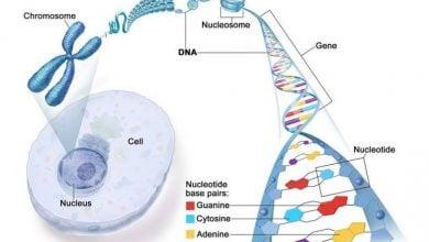 Photo of Cancer-causing mutation suppresses immune system around tumours