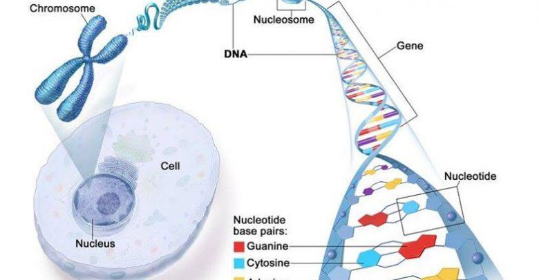 Cancer-causing mutation suppresses immune system around tumours