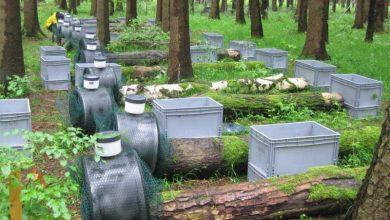 Photo of درختان مرده، زنده اند