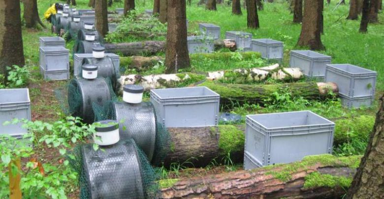 Dead trees are alive with fungi - اخبار زیست فن
