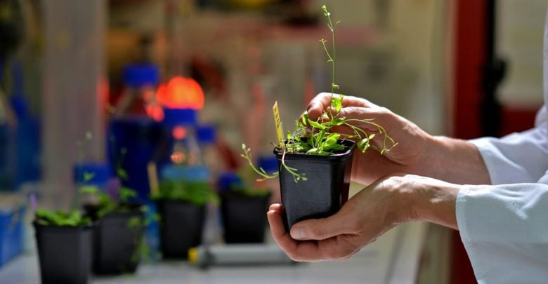 How climate change alters plant growth - اخبار زیست فن
