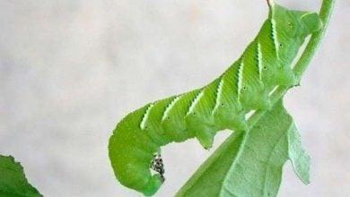Photo of کشف مسیر جدید تولید سیگنال های SOS در گیاهان