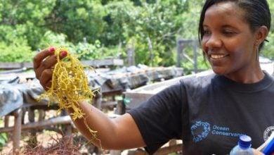Photo of کشاورزی جلبک به زنان KWALE بهره برداری اقتصاد BLUE