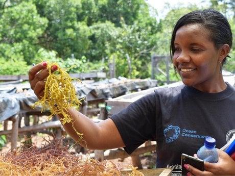 کشاورزی جلبک به زنان KWALE بهره برداری اقتصاد BLUE_اخبار زیست فناوری