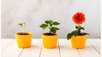 Photo of گیاهان گلدار جهان را فتح کردند