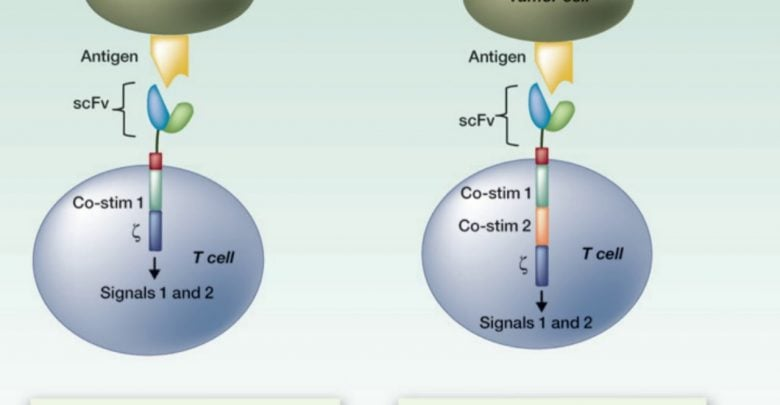 CAR T-Cell Therapies Drive Outcomes in Lymphoma, Myeloma