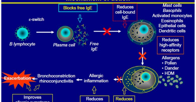 Omalizumab improves efficacy of oral immunotherapy for multiple food allergies