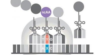 Photo of ساخت باکتری مصنوعی با قابلیت تکثیر و ترجمه DNA غیرعادی!