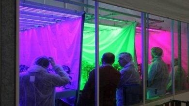 Photo of توضیح چگونگی تطبیق فتوسنتز گیاهان با شدت نور