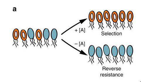 برای جلوگیری از روند مقاومت میکروبها، کاهش مصرف آنتیبیوتیک کافی نیست - اخبار زیست فناوری