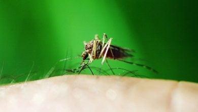 Photo of ایجاد مالاریای فرانکشتاین برای توسعه واکسن این بیماری!