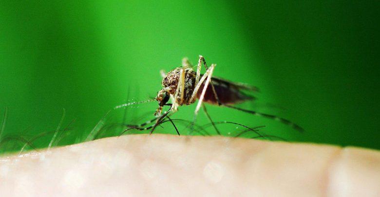 ایجاد مالاریای فرانکشتاین برای توسعه واکسن این بیماری! - اخبار زیست فناوری