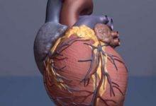 دخالت چربیهای باکتریایی در ایجاد بیماریهای قلبی - اخبار زیست فناوری