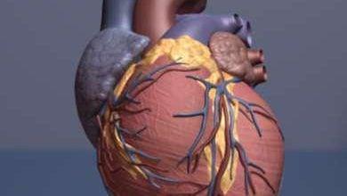Photo of دخالت چربیهای باکتریایی در ایجاد بیماریهای قلبی