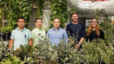 Photo of پردهبرداری از راز موفقیت گیاهان CAM از طریق توالییابی و بررسی ژنوم آنها