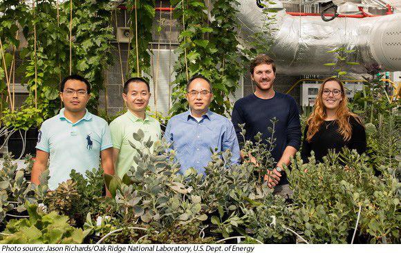 پردهبرداری از راز موفقیت گیاهان CAM از طریق توالییابی و بررسی ژنوم آنها - اخبار زیست فناوری