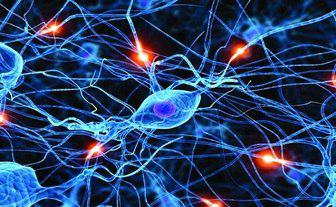 Photo of سلولهای جدید شبهعصبی امکان بررسی سنتز اجزای حیاتی سلولی را فراهم میکند