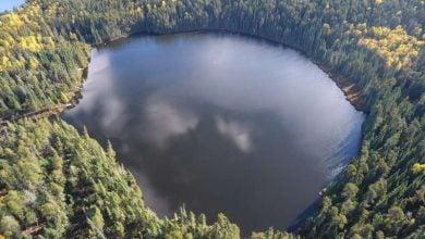 Photo of تأثیر کم کاهش میزان نیتروژن دریاچه بر شکوفایی جلبکی