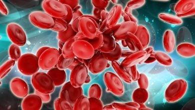 Photo of ژن HLF از سلولهای بنیادی خون محافظت میکند