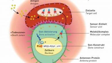 Photo of اتصال پروتئین های مهار کننده سرطان به آنتن های سلولی