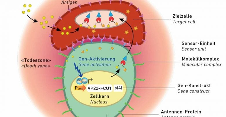 اتصال پروتئین های مهار کننده سرطان به آنتن های سلولی_اخبار زیست فناوری