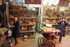 Photo of بازار مرغ و طیور چینی کلکسیون ویروس های آنفولانزای خوکی!