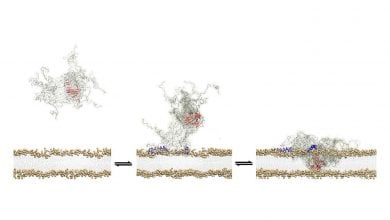 Photo of عناصر بیماری مزمن پارکینسون از عوامل غشاء غشایی نشان داده شده است