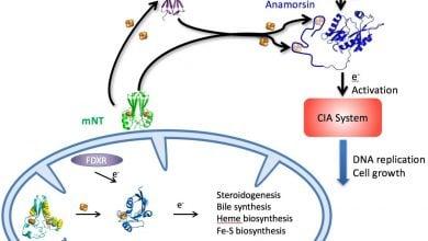پروتئین MiNT یک هدف تازه برای حمله به بیماری است_اخبار زیست فناوری