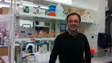 SLU researchers discover BRCA cancer cells' last defense