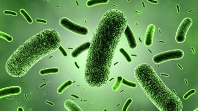 Photo of Your microbiota's previous dining experiences may make new diets less effective