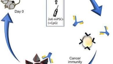 واکسن سلول بنیادی، موش آزمایشگاهی را دربرابر چندین سرطان ایمن میکند - اخبار زیست فناوری