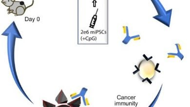 Photo of واکسن سلول بنیادی، موش آزمایشگاهی را دربرابر چندین سرطان ایمن میکند