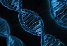 Photo of شناسایی ۱۵ ژن جدید که در شکل دادن چهره انسان دخیل هستند!